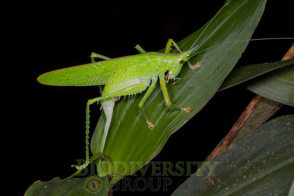 Biodiversity Group, IMGP8162
