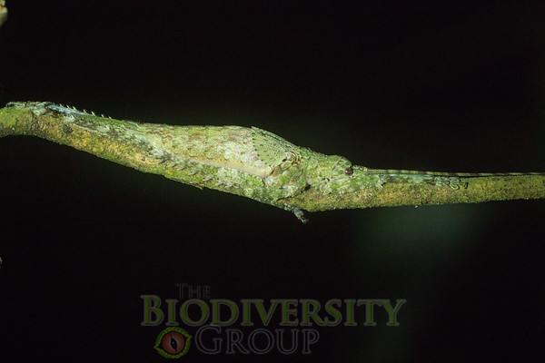Biodiversity Group, _DSC4491