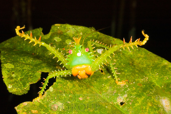 Biodiversity Group, IMGP7904