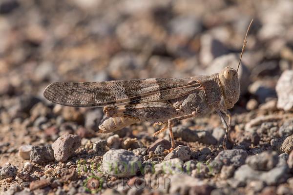 Biodiversity Group, _DSC9912