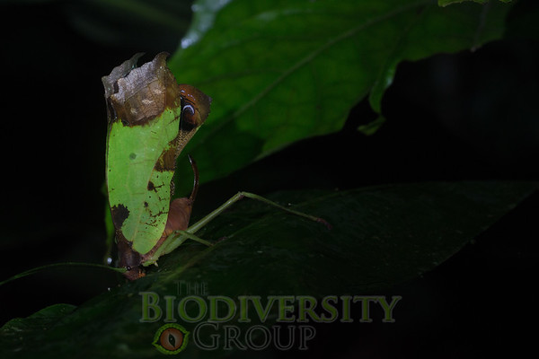 Biodiversity Group, _DSC4421