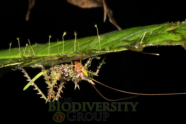 Biodiversity Group, _DSC3933