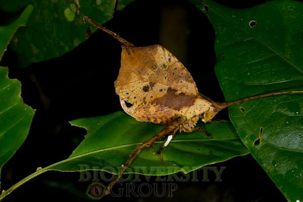 Biodiversity Group, _MG_0159