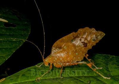 Biodiversity Group, IMGP8335