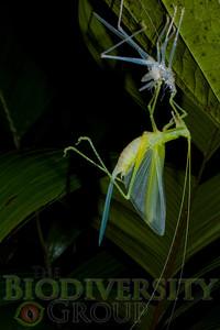 Biodiversity Group, IMGP2277