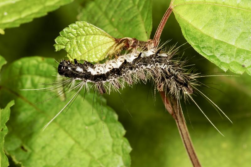 lepidoptera. Mindo, Pichincha Ecuador