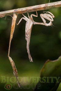 Biodiversity Group, _DSC8583