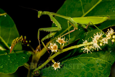 Biodiversity Group, DSC07006