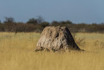 Macrotermes michaelseni (Termitidae, Macrotermitinae) mound. Etosha N.P., Oshikota Namibia