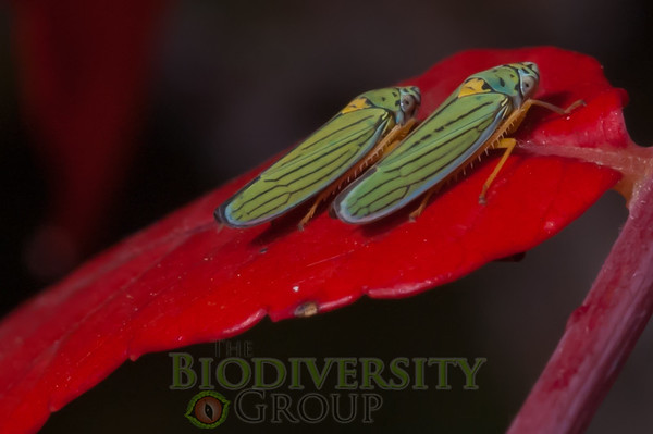 Biodiversity Group, PICT2887