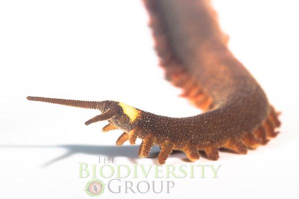 Biodiversity Group, _MG_8205