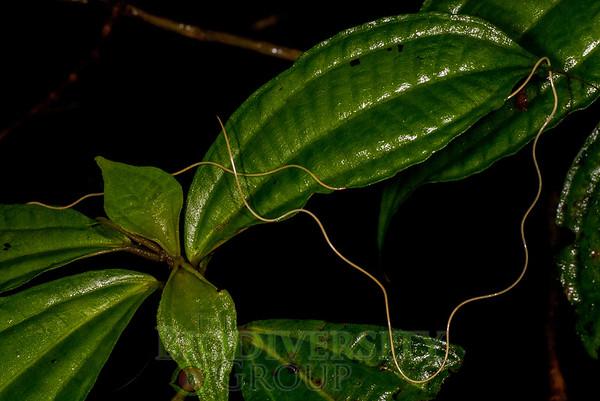 Biodiversity Group, DSC06091