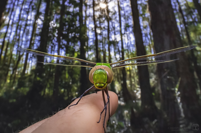 Just call me... The Bug Whisperer 😉