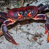 Hurricane Crab