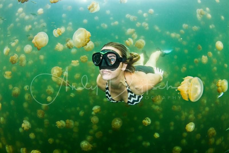 Jellyfish Lake, Palau