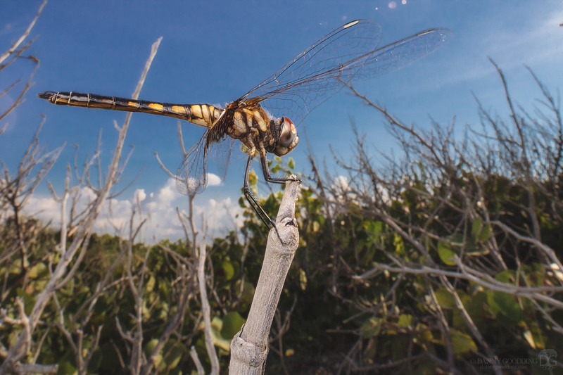 Dragonfly at the beach