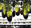 yellow-blk velocity-iorillo, 50x50 canvas-M