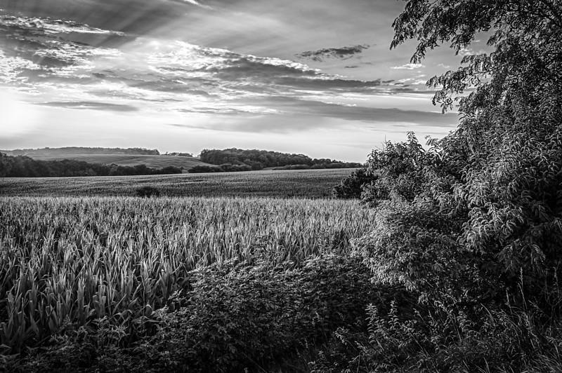 Setting sun over corn field