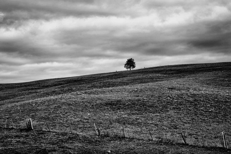 Pasture and tree