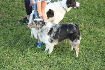 Iowa County Fair Dog Show 8-30-18