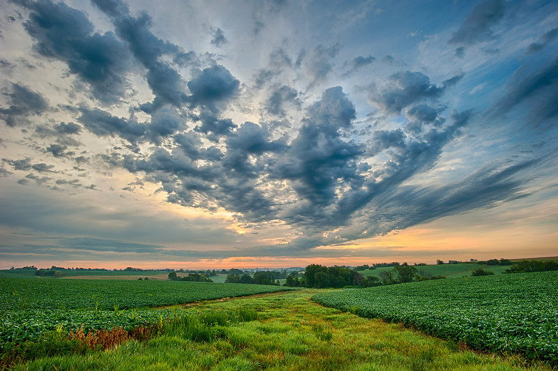 Sunrise clouds over Iowa row crop