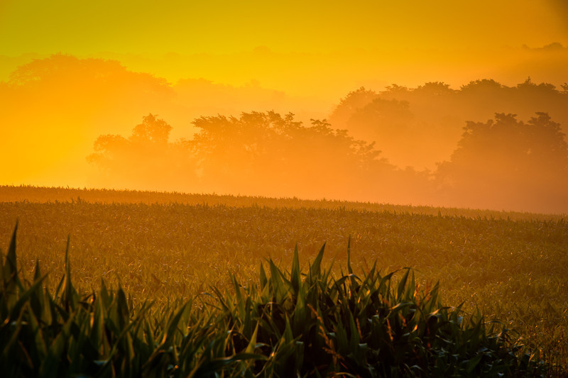 Foggy sunrise over central Iowa farm land.