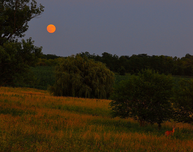 Harvest moon and deer