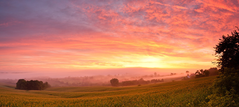 Sunrise over cornfield