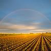 Rainbow in Iowa