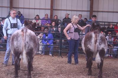 Iowa County Fair Beef Show 9-1-18