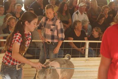 Iowa County Fair Gilt Show 8-30-18