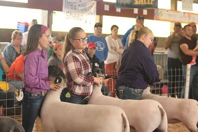 Iowa County Fair Sheep Show 9-1-18