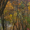 Fall Colors at Ledges State Park in Boone, Iowa