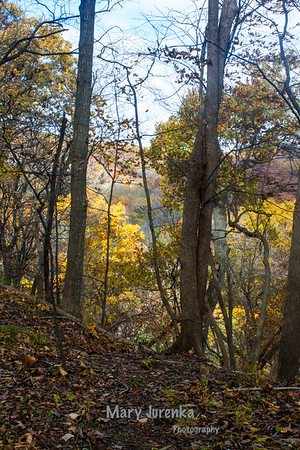 Ledges State Park in Boone, Iowa