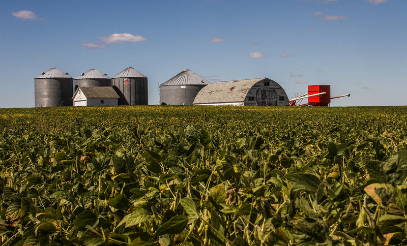 Soybeans to Harvest Near Fort Dodge, Iowa