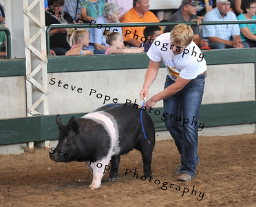 The Reserve Champion Registered Breeding Gilt was awarded to Austin Hofman, of the Sioux Center FFA chapter, in the FFA Parade of Champions at the Iowa State Fair on Aug. 10. (Iowa State Fair/ Steve Pope Photography)