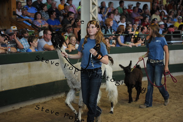 A llama and a baby llama, which is called a cria are led by Garrett Davies and Kayla Meeker, of North Polk FFA at Alleman, in the FFA Parade of Champions at the Iowa State Fair on Aug. 10. (Iowa State Fair/ Steve Pope Photography)