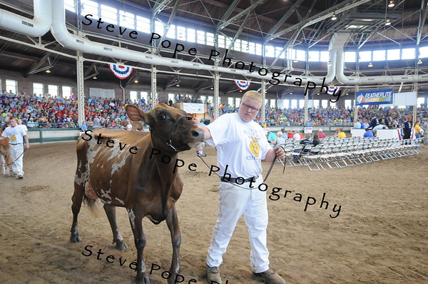 Grand Champion Ayrshire was exhibited by Kaleb Kruse, of the Maquoketa Valley FFA chapter at Delhi, in the FFA Parade of Champions at the Iowa State Fair on Aug. 10. (Iowa State Fair/ Steve Pope Photography)