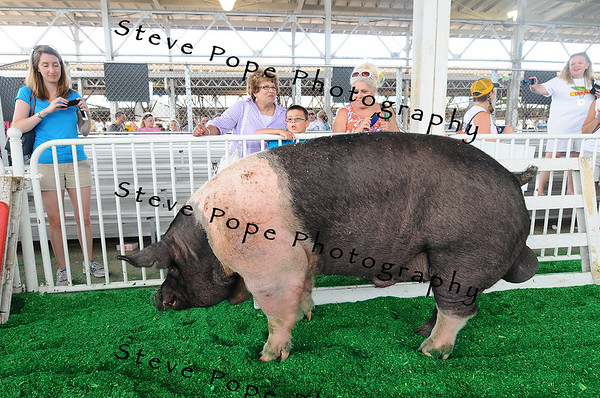 Cathy and Thomas Kimm and Nancy Potter-Johnson, of Waterloo, watch the Big Boar Contest at the Iowa State Fair on Aug. 8. (Iowa State Fair/ Steve Pope Photography)