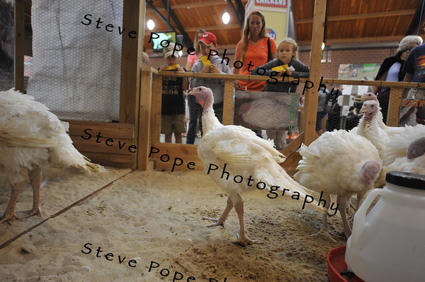 The Kok family, William, Noah, Gwen, and Rachel, of Moravia, look at turkeys in the Animal Learning Center at the Iowa State Fair on Aug. 7. (Iowa State Fair/ Steve Pope Photography)