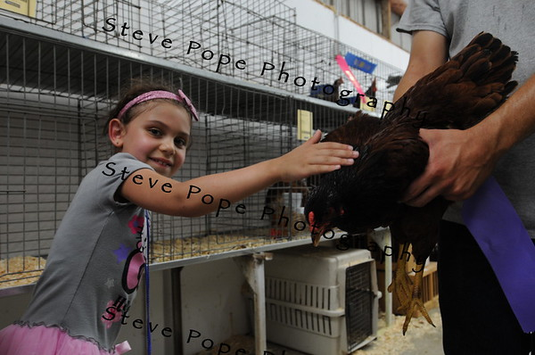 Abby Bean pets a chicken at the Iowa State Fair on Aug. 11. (Steve Pope Photography/ Iowa State Fair)