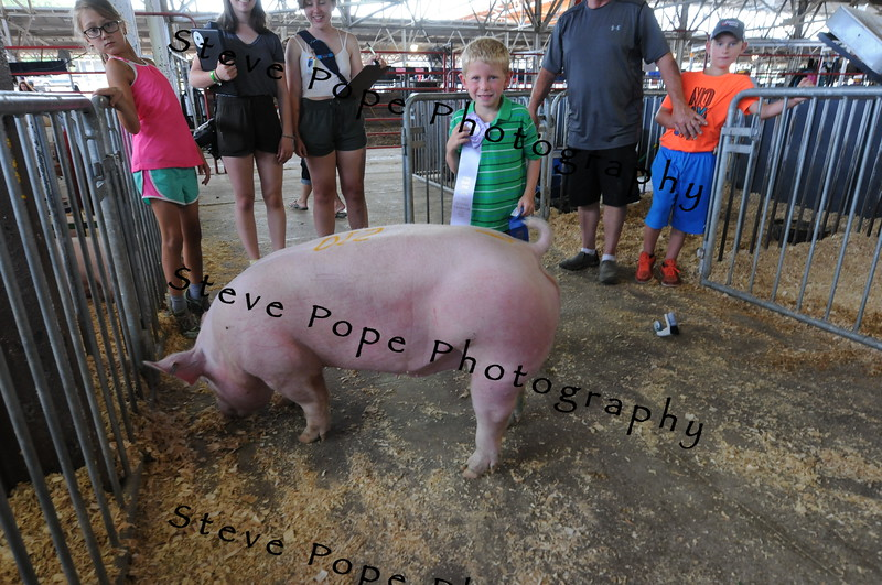 Ezra Marzen, 5, of Stacyville, holds a ribbon for an award-winning pig at the Iowa State Fair on Aug. 20. (Iowa State Fair/ Steve Pope Photography)