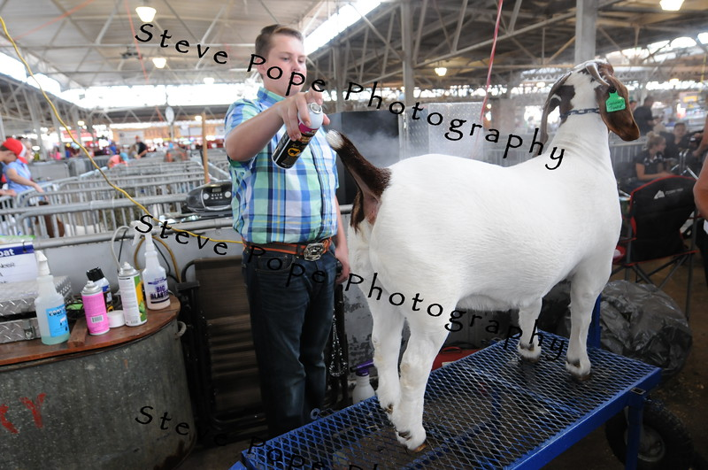 Jason Miller, of Bloomfield, prepares his goat for a show at the Iowa State Fair on Aug. 20. (Iowa State Fair/ Steve Pope Photography)