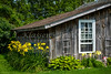 An old shed with yellow lilies in the Amana Colonies, Iowa, USA.