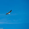 2018-02-27 seagull at TTRA 3