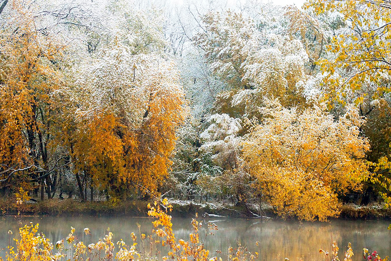 Snow covered fall trees