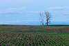 Late evening light on a farm field. Story County, IA<br /> <br /> IA-100605-0017