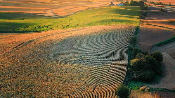 Near Moville, Iowa harvest 2019
