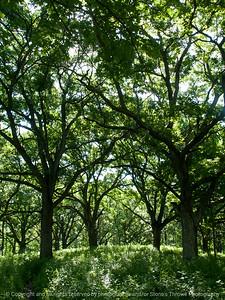 015-forest-wdsm-16jun16-09x12-001-9931