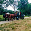 Paris, France,  French, Park Maintenance Crew Riding in Horse Driven Carriage in Vincennes Park
